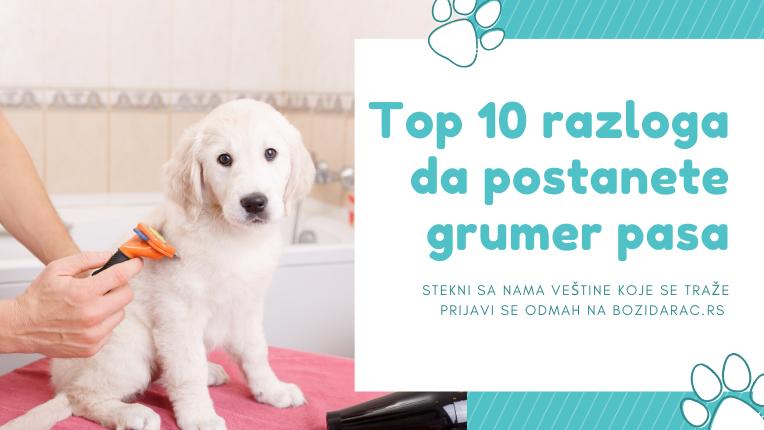 Top 10 razloga da postanete grumer pasa